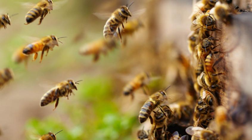 Из-за атаки пчел в Танзании был прерван матч (Видео)